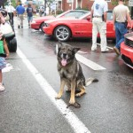 We had to bring in the K-9 unit to control the crowd around the Saleens. This guy really struck fear in everyone's eye!